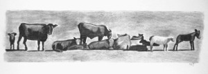 Charcoal 2012 Cows on I Street