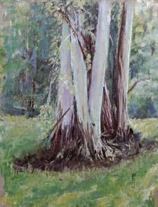 Pastel 2016 Eucalyptus Stand